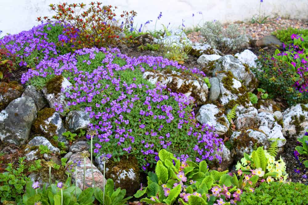This garden combines small purple flowers with lichen-covered rocks for an alpine effect.