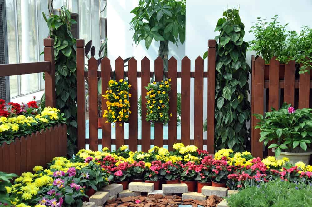 Beautiful stained brown fence done in a variety of sections and heights with squared of posts really make these bright flowers pop.