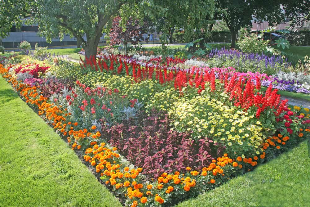 Adding flowers of contrasting heights and textures can make your garden more visually interesting.