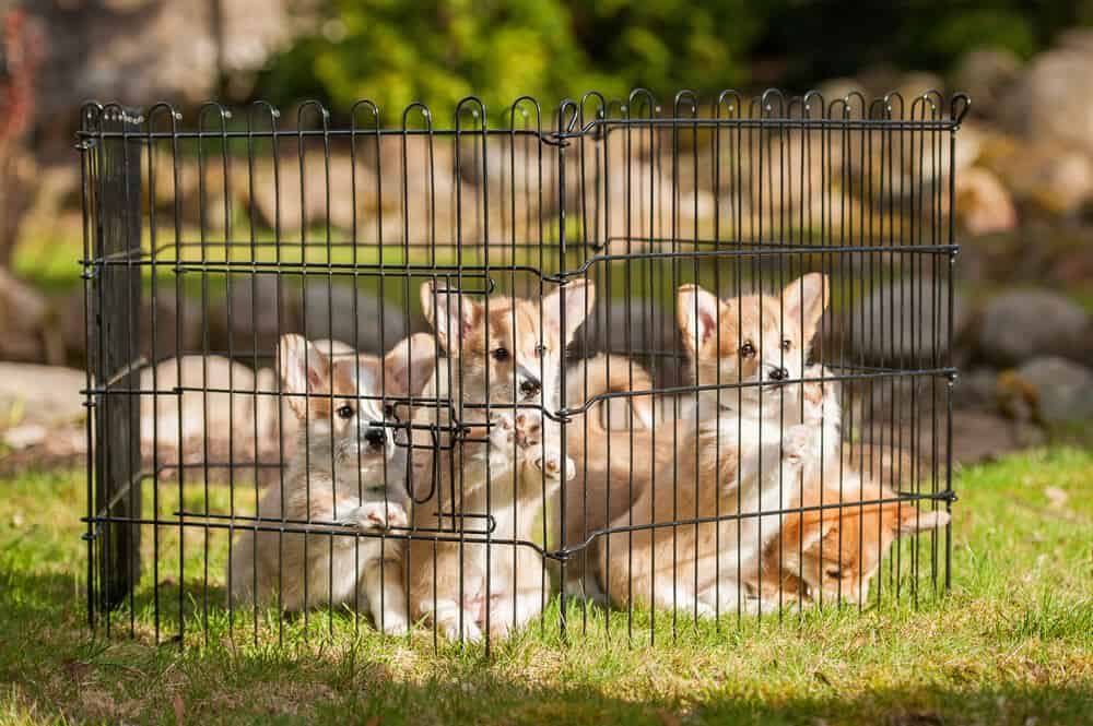Small and light weight black metal wire creates a portable outdoor kennel.
