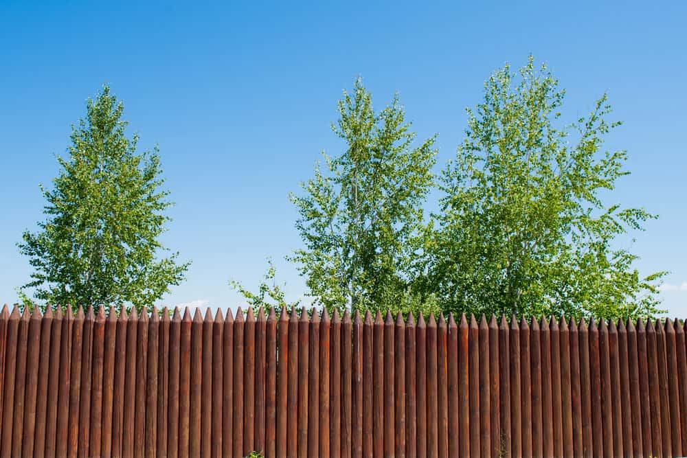 A clean and neatly put together stockade fence that is still visually appealing.