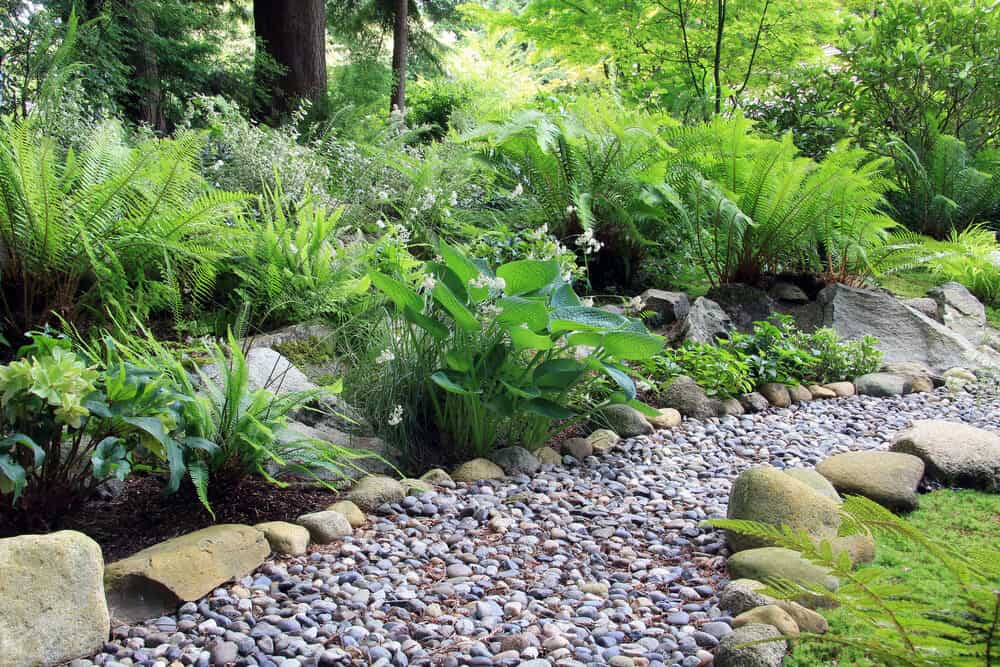 Shade gardens, like this one with ferns, don't need a lot of sunlight to bring vibrant green to your garden.