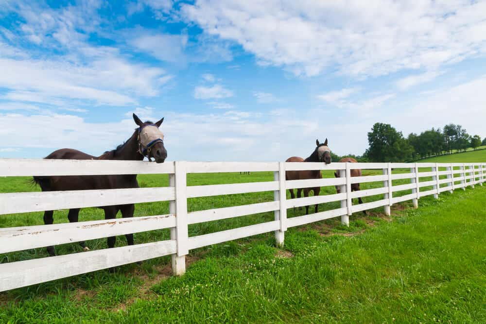 White farm fence with four rails high, for extra height.