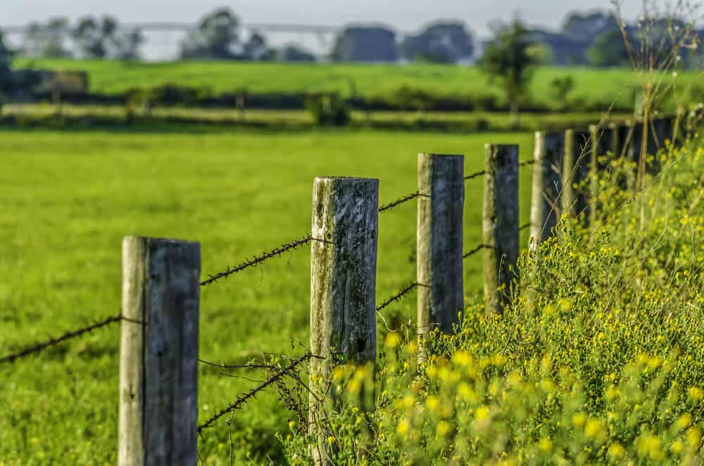 Round posts spread out over 4-6 feet lined with barb wire are a great deterrent for animals.