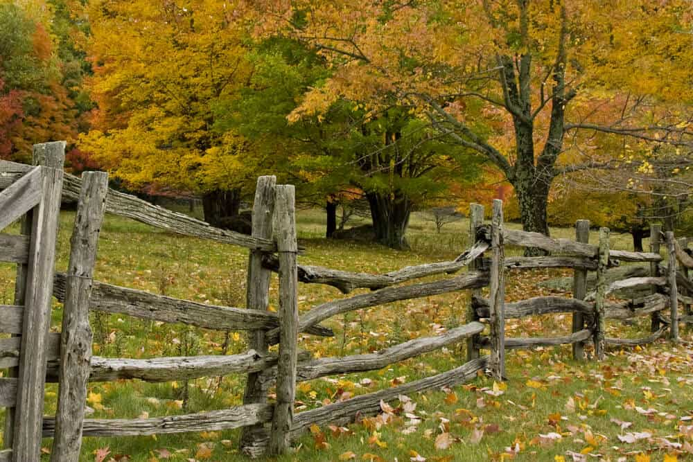 Split rail fences are not always pretty, but do help establish property lines and keep unwanted visitors away.
