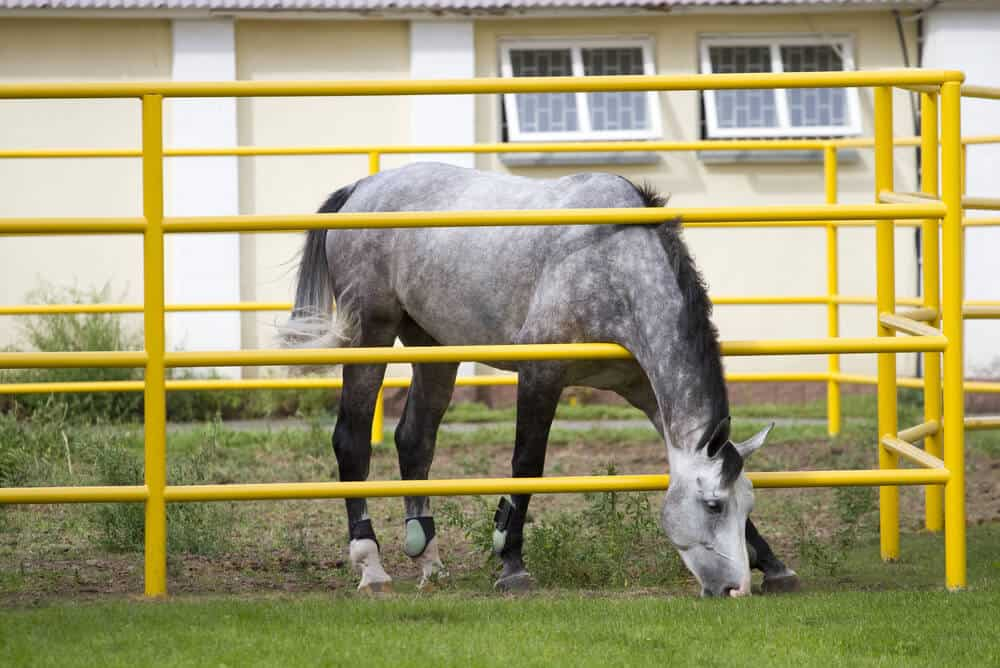 A yellow round tube metal fence is also nice choice for horses.