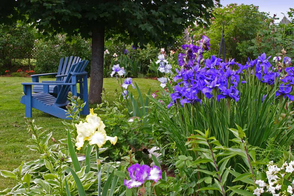 Irises can be used year after year, and look beautiful when matched to your lawn furniture.