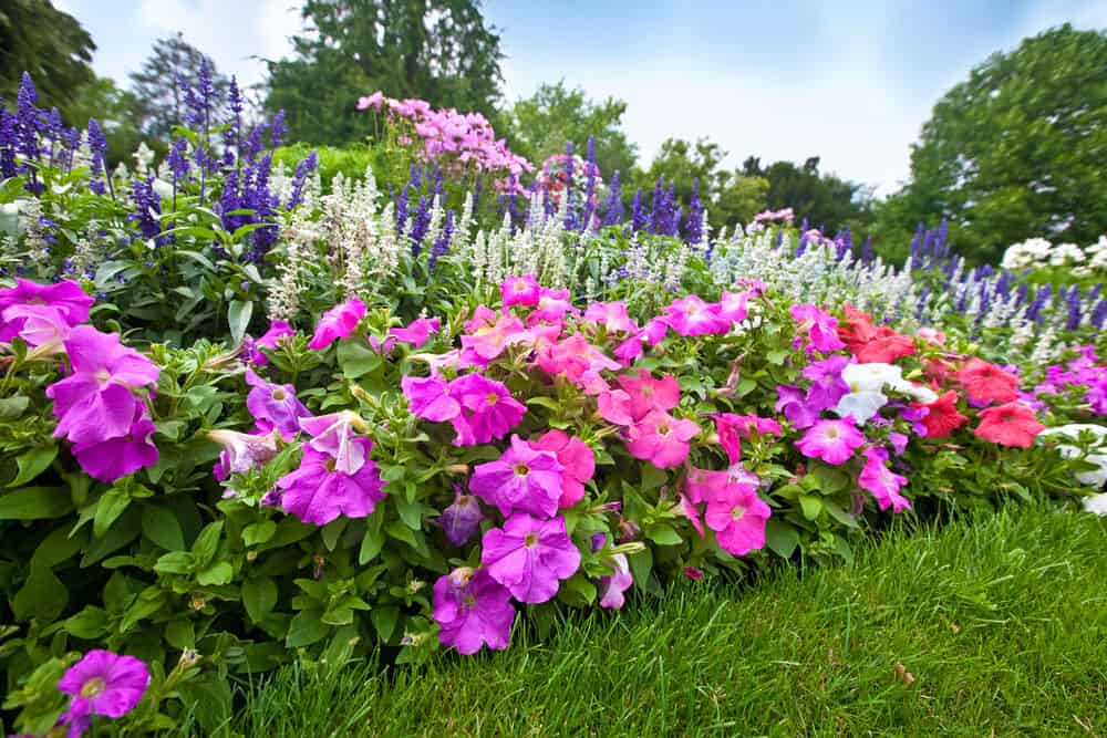 Mix and match your perennials and annuals for a different look to your garden each year!